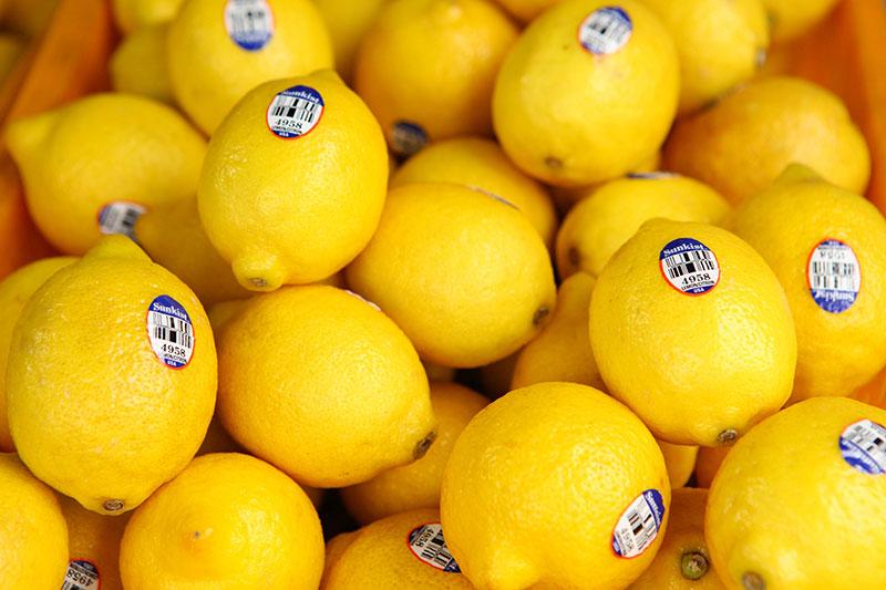 HLB, una de las enfermedades más devastadora y temida del sector citrícola
